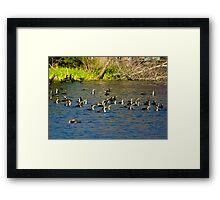 Cormorants Galore Framed Print
