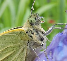 Large White Butterfly 13 by Magic-Moments