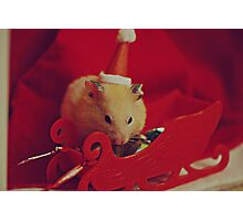 I am your little Santa Hamster  Photographic Print