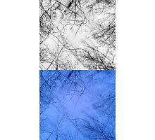 Bare trees branches Photographic Print