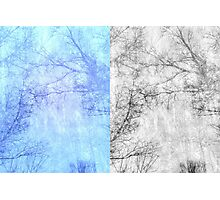 Bare trees branches 2 Photographic Print