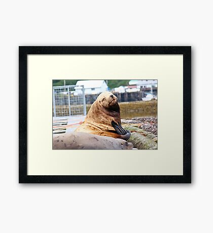 Smiling Sea Lion Photography Print Framed Print