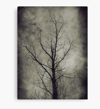 Dark trees 4 Canvas Print