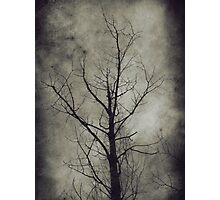 Dark trees 4 Photographic Print