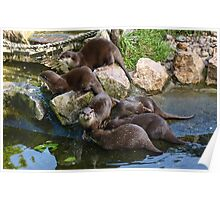 Asian Otters Poster