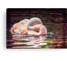 Miami Pink Canvas Print