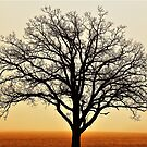Tree Fog by Graphxpro