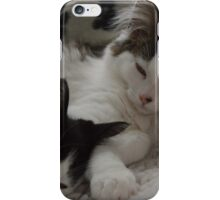 Fluffy Kitten Brothers iPhone Case/Skin