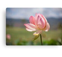 Pastels - The Colour Pink Canvas Print