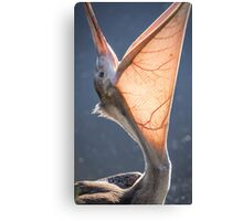 Pelican Open Wide Canvas Print