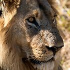 Male Lion by Marylou Badeaux
