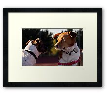 Curiosity killed the cat, but for a while I was a suspect. Framed Print