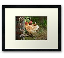 "We Are The ""CHAIRful"" Chooks Of Tranquillity! Chooks  - NZ Framed Print"