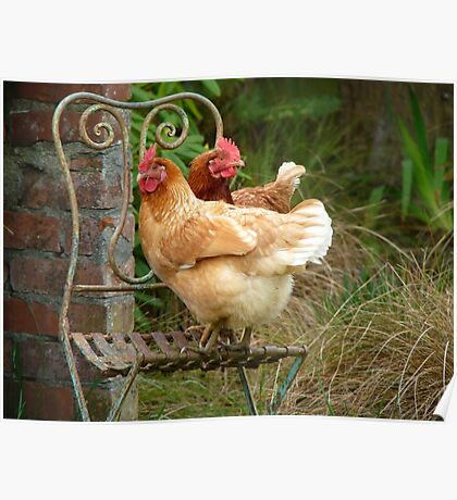 """We Are The """"CHAIRful"""" Chooks Of Tranquillity! Chooks  - NZ Poster"""