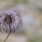 Wispy flower by Martina Fagan