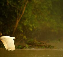 Mornings in the Rainforest by David McGilchrist