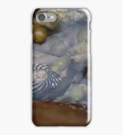 Seaside; Sea Snail iPhone Case/Skin