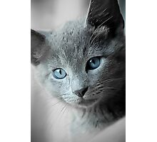 Blue Eyed Kitten Photographic Print