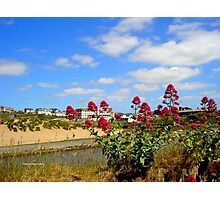 Coastal Flowers Photographic Print