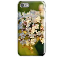 Valerian iPhone Case/Skin