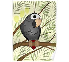 Timneh African Grey Poster