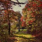 A stroll among the fall leaves by vigor