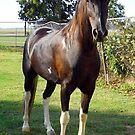 Little Joe, A Sweet Horse by WildestArt