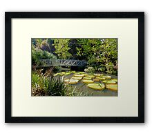 Bridge over the Water Lily Pods Framed Print