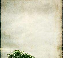 Lone Tree by Darren Fisher