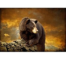 The Bear Went Over The Mountain Photographic Print