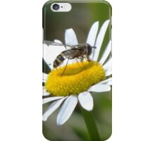 Didn't anyone tell him summer is over? iPhone Case/Skin