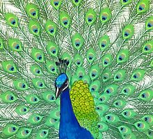 Colorful Peacock Painting Art by LGdesigns