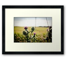 Purple Thistle  Framed Print