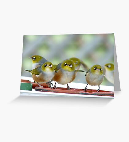 Excuse Me Waiter... But...Where Is The Main Course? - Silver-Eyes - NZ Greeting Card