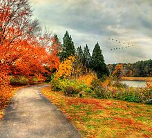 Fall Along Lake Nevin by Darren Fisher