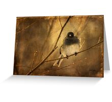 Backlit Birdie Being Buffeted Greeting Card