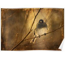 Backlit Birdie Being Buffeted Poster
