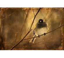 Backlit Birdie Being Buffeted Photographic Print