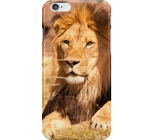 Male African Lion-1 iPhone Case/Skin