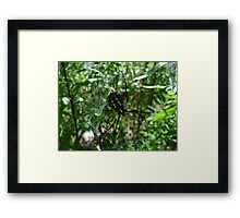 Lunch is served! Framed Print