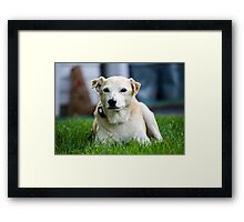 """Hudson""  Lab Rescue Senior Framed Print"