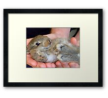 WOW!!- This Is Sooooo Comfy!! - Baby Bunny - NZ Framed Print