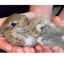 WOW!!- This Is Sooooo Comfy!! - Baby Bunny - NZ Photographic Print