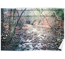Monongahela National Forest Cherry River Poster