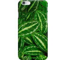 Maranta leaves background iPhone Case/Skin