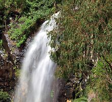 Cameron Falls by Wayne  Nixon  (W E NIXON PHOTOGRAPHY)