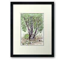 Blue gum trees across the road from my studio Framed Print