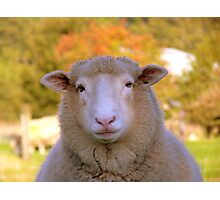 I Have My Winter Coat All Sorted... - Sheep - NZ Photographic Print