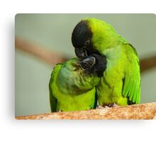 This Is Simply Heavenly!!! - Nandae Conures - NZ Queenspark Canvas Print