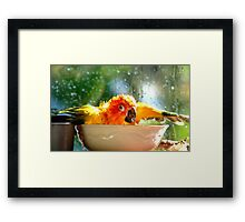 I'm Singing In The Rain..!!! - Sun Conure - NZ Framed Print